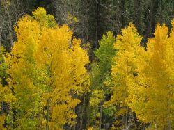 Swirls Domestic Retreat (DEPOSIT) - Breckenridge, CO